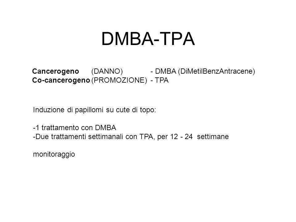DMBA-TPA Cancerogeno (DANNO) - DMBA (DiMetilBenzAntracene)