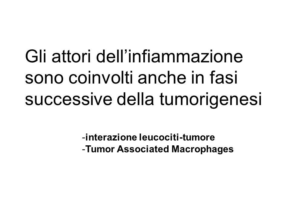 Gli attori dell'infiammazione sono coinvolti anche in fasi successive della tumorigenesi