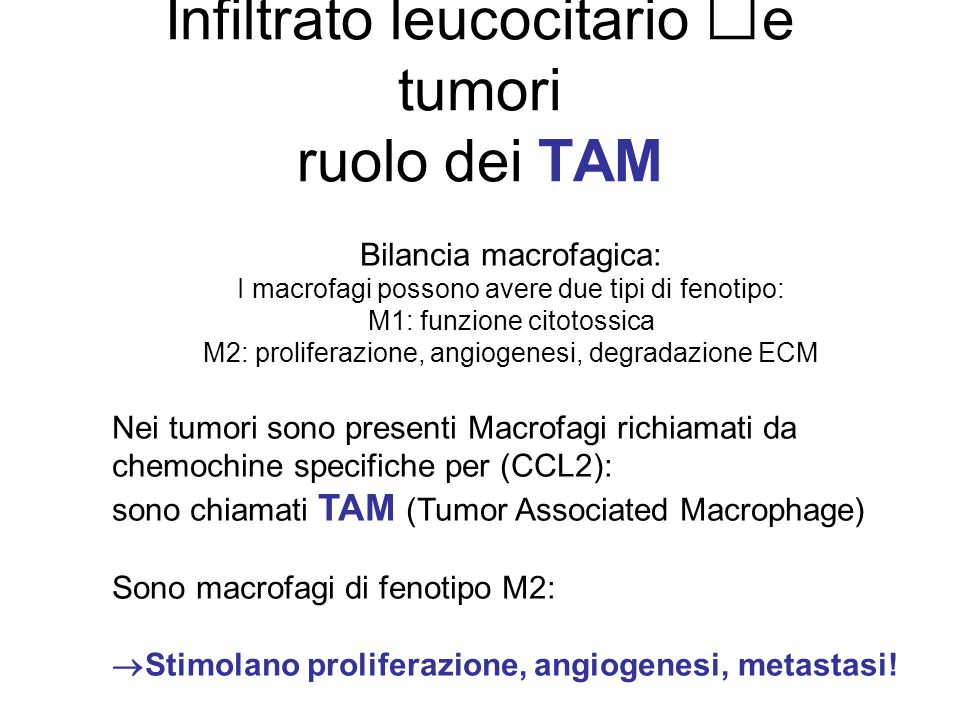 Infiltrato leucocitario e tumori ruolo dei TAM