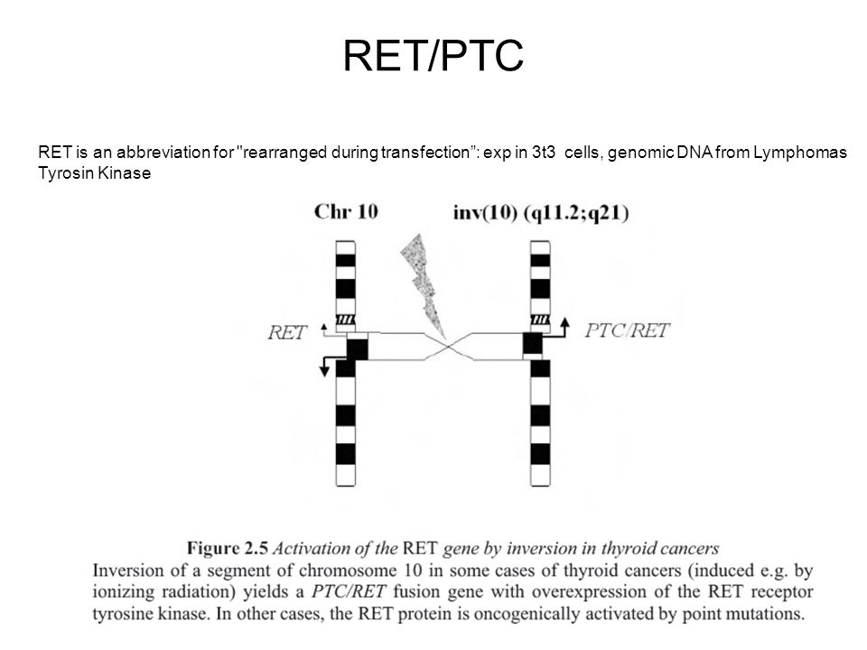 RET/PTC RET is an abbreviation for rearranged during transfection : exp in 3t3 cells, genomic DNA from Lymphomas.