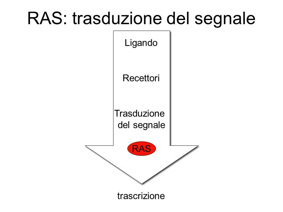 RAS: trasduzione del segnale