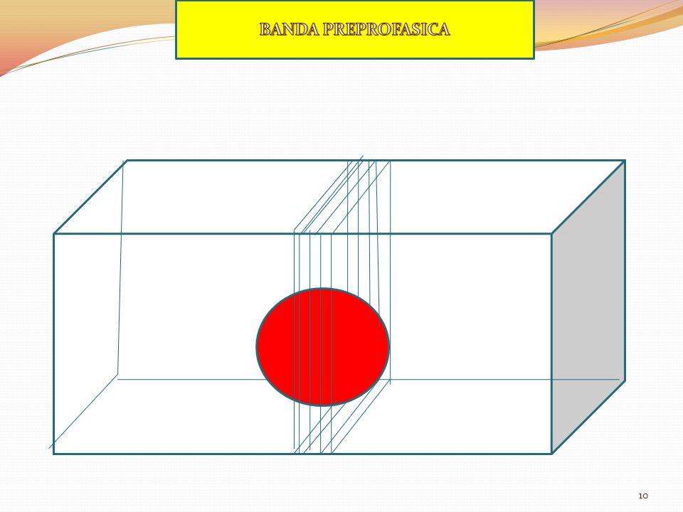 BANDA PREPROFASICA