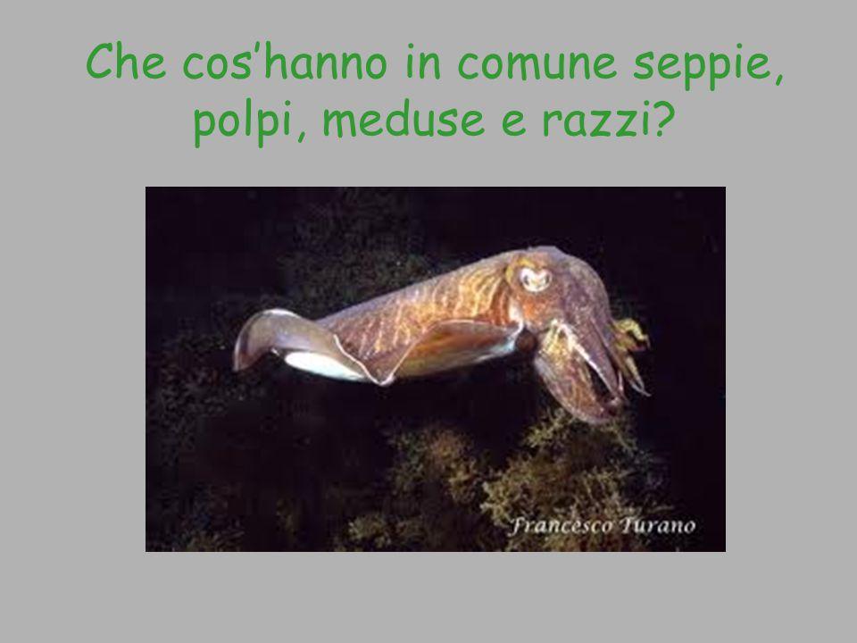 Che cos'hanno in comune seppie, polpi, meduse e razzi