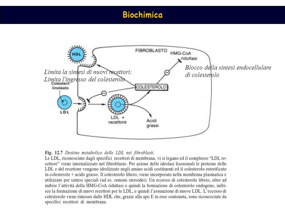 Blocco della sintesi endocellulare di colesterolo