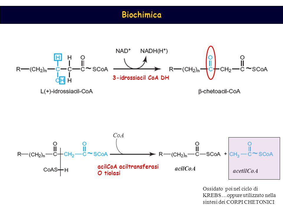 CoA acilCoA acetilCoA 3-idrossiacil CoA DH acilCoA aciltransferasi