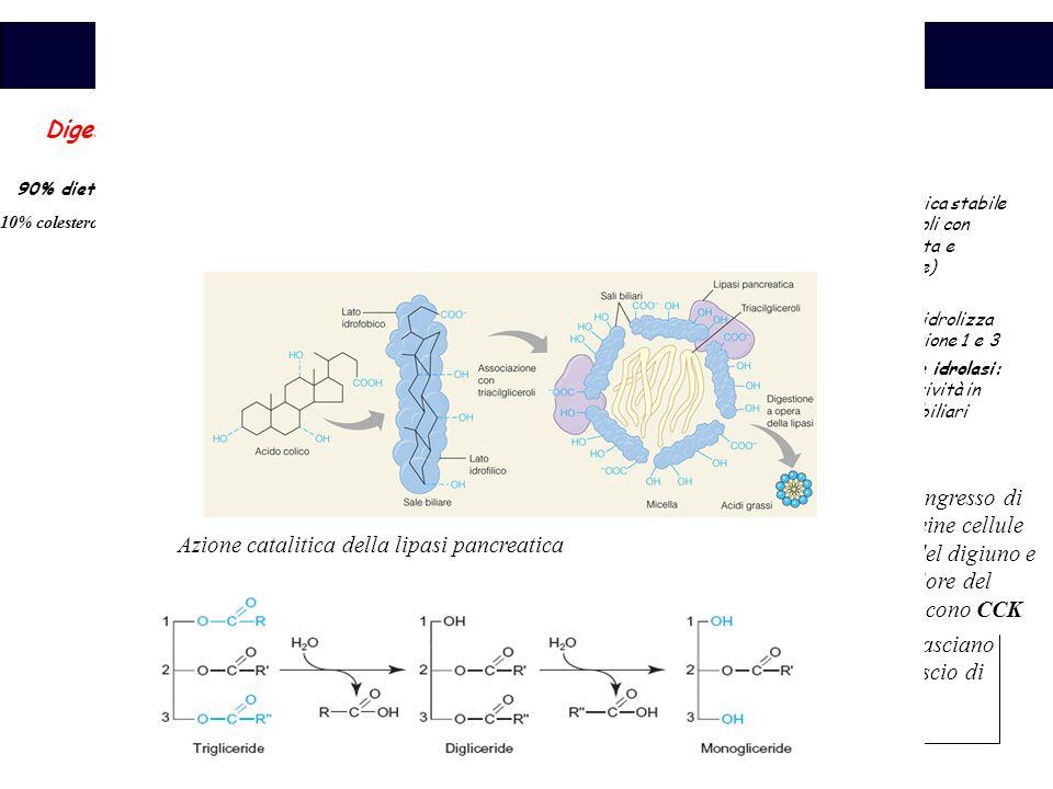 Azione catalitica della lipasi pancreatica