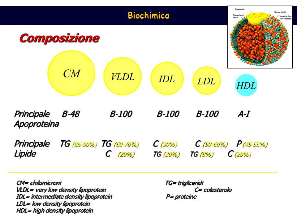 Composizione CM VLDL IDL LDL HDL Principale B-48 B-100 B-100 B-100 A-I