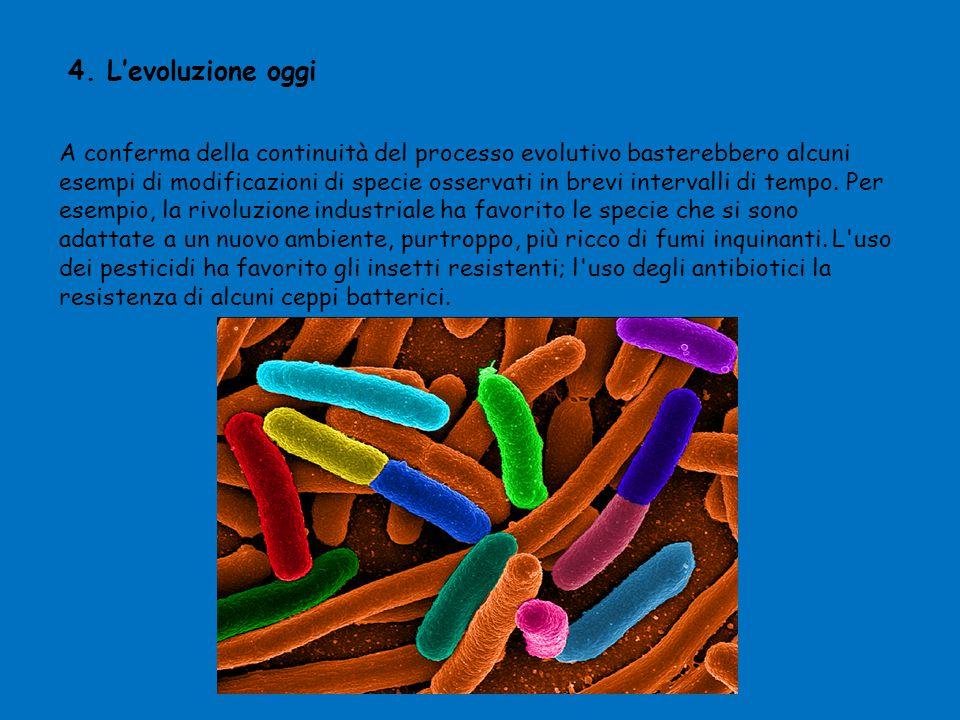 4. L'evoluzione oggi