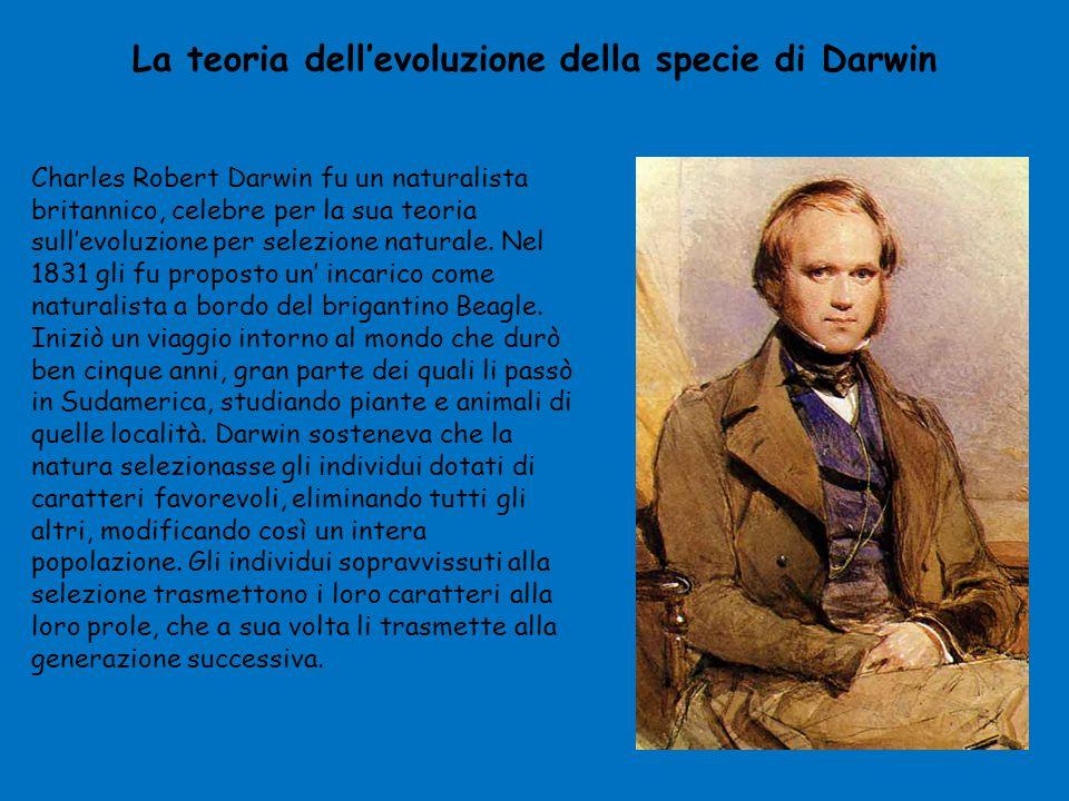La teoria dell'evoluzione della specie di Darwin