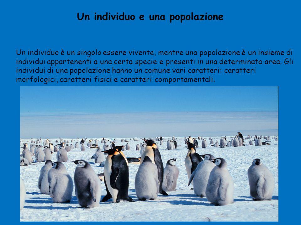 Un individuo e una popolazione