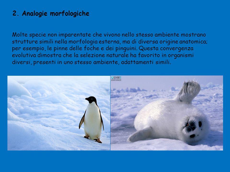 2. Analogie morfologiche