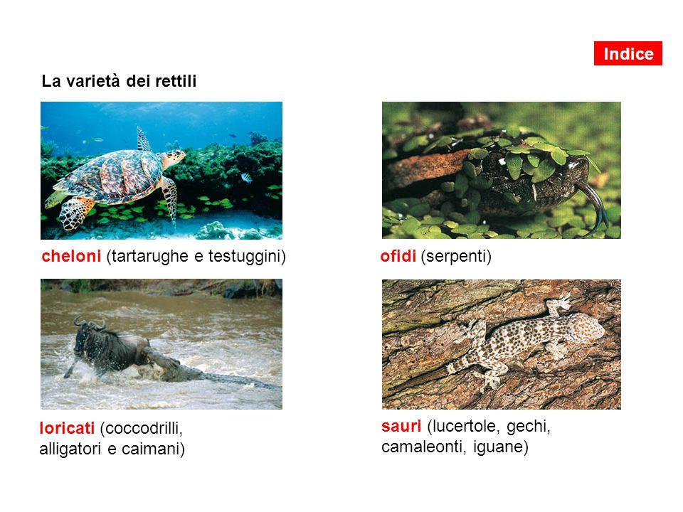 cheloni (tartarughe e testuggini) ofidi (serpenti)