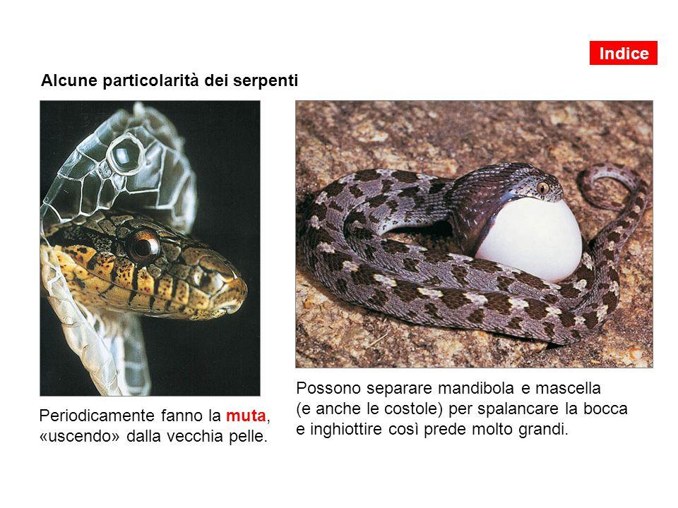 Alcune particolarità dei serpenti