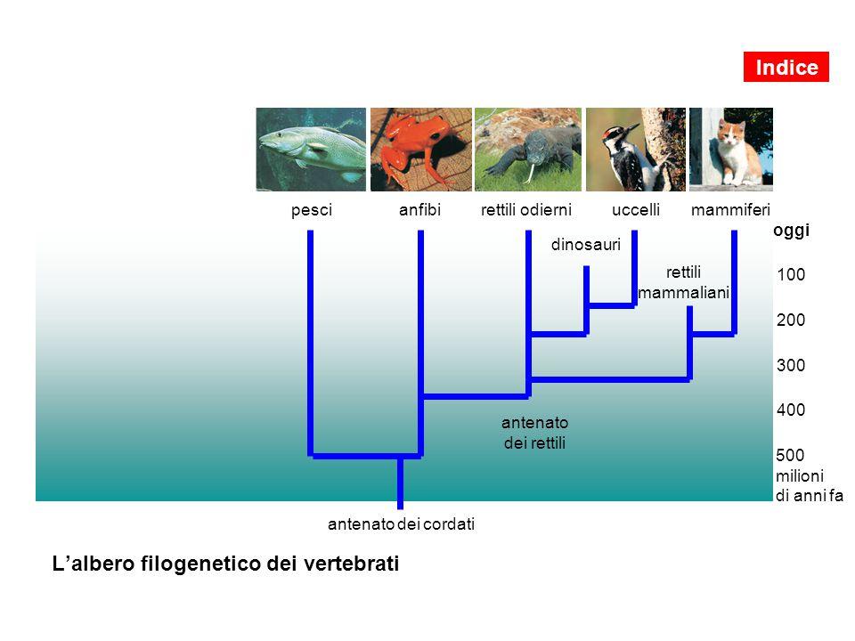L'albero filogenetico dei vertebrati