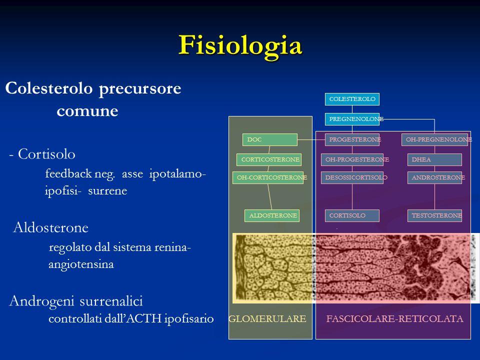 Fisiologia Colesterolo precursore comune - Cortisolo