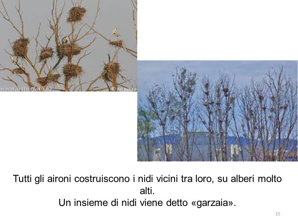 Un insieme di nidi viene detto «garzaia».
