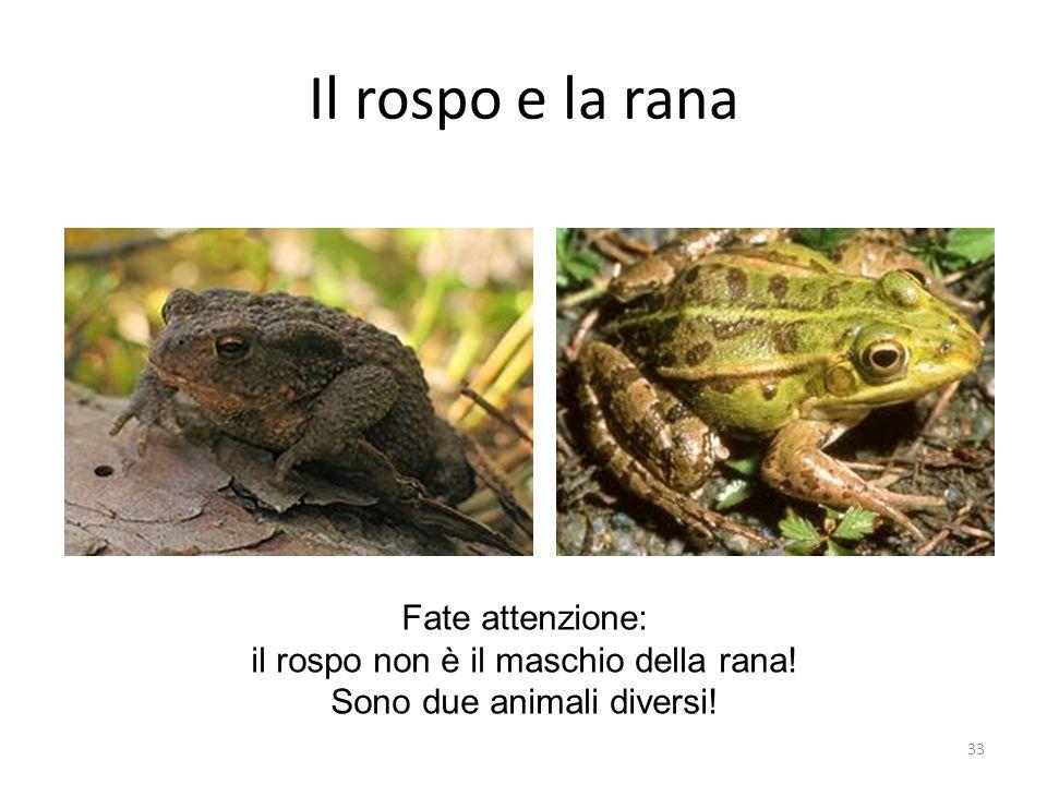 Il rospo e la rana Fate attenzione: