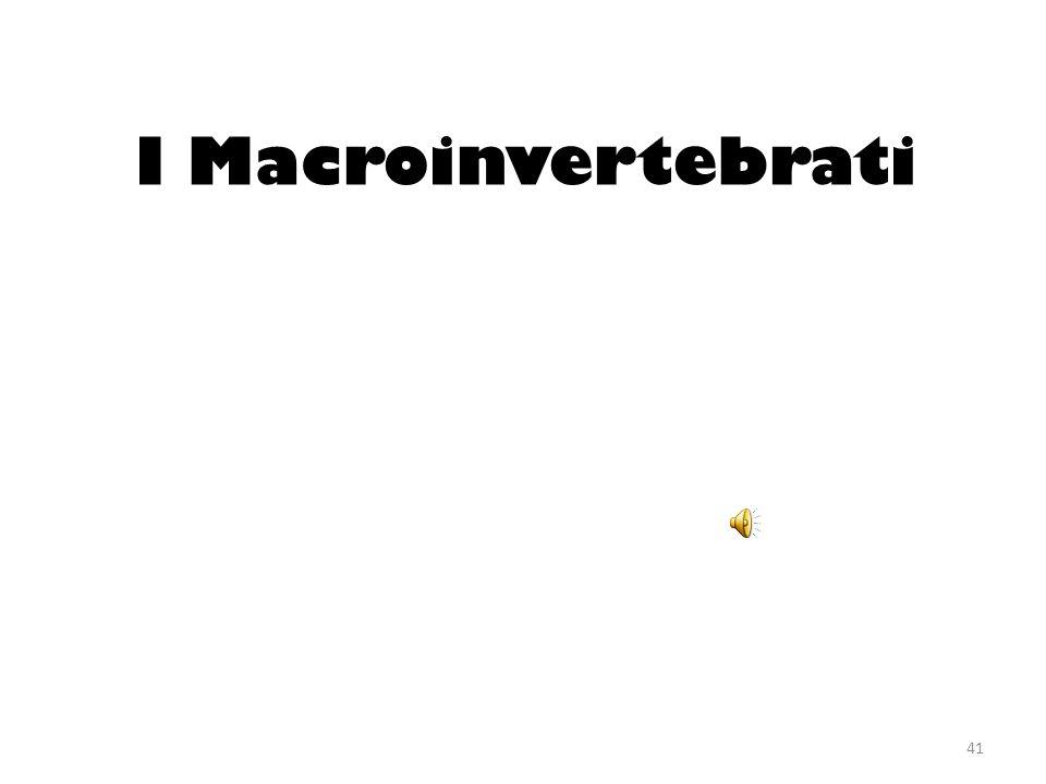 I Macroinvertebrati