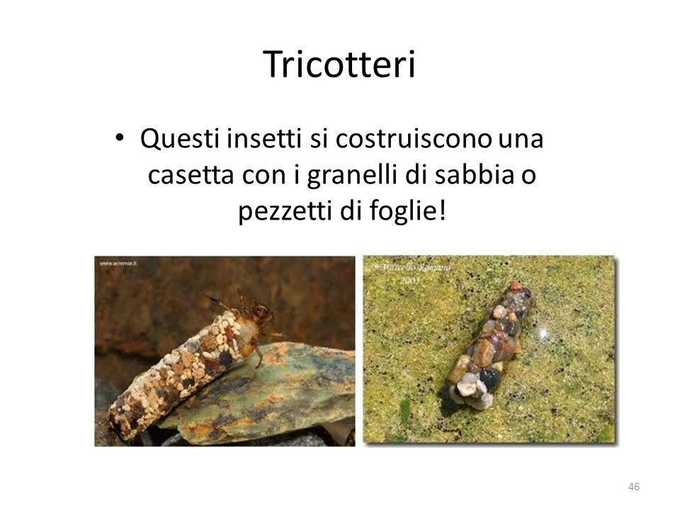 Tricotteri Questi insetti si costruiscono una casetta con i granelli di sabbia o pezzetti di foglie!