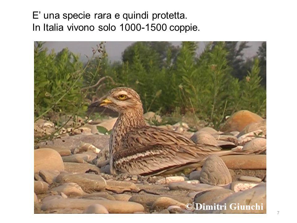 E' una specie rara e quindi protetta.