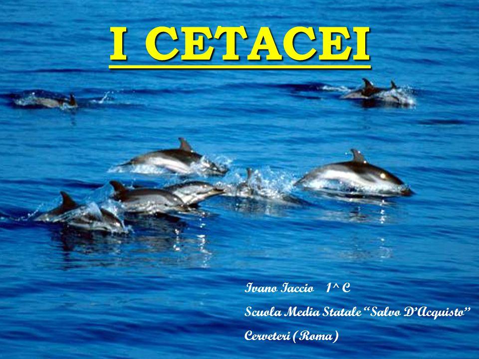 I CETACEI Ivano Iaccio 1^ C Scuola Media Statale Salvo D'Acquisto