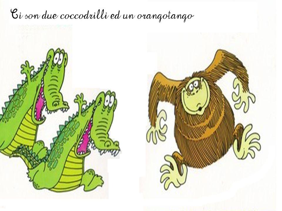 Ci son due coccodrilli ed un orangotango