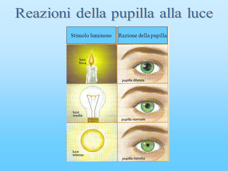 Stimolo luminoso Razione della pupilla