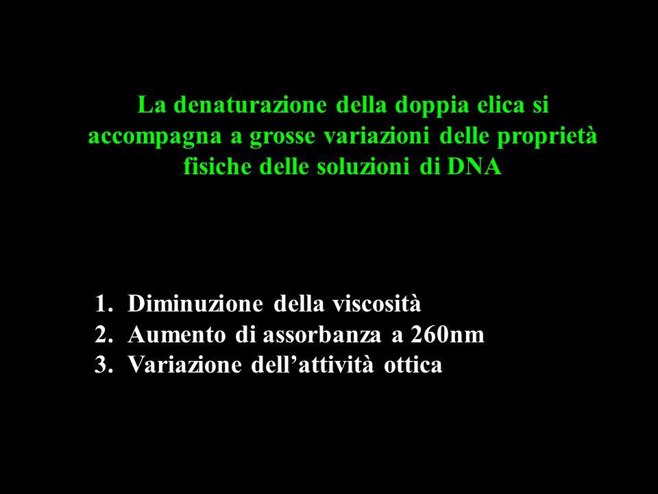 La denaturazione della doppia elica si accompagna a grosse variazioni delle proprietà fisiche delle soluzioni di DNA