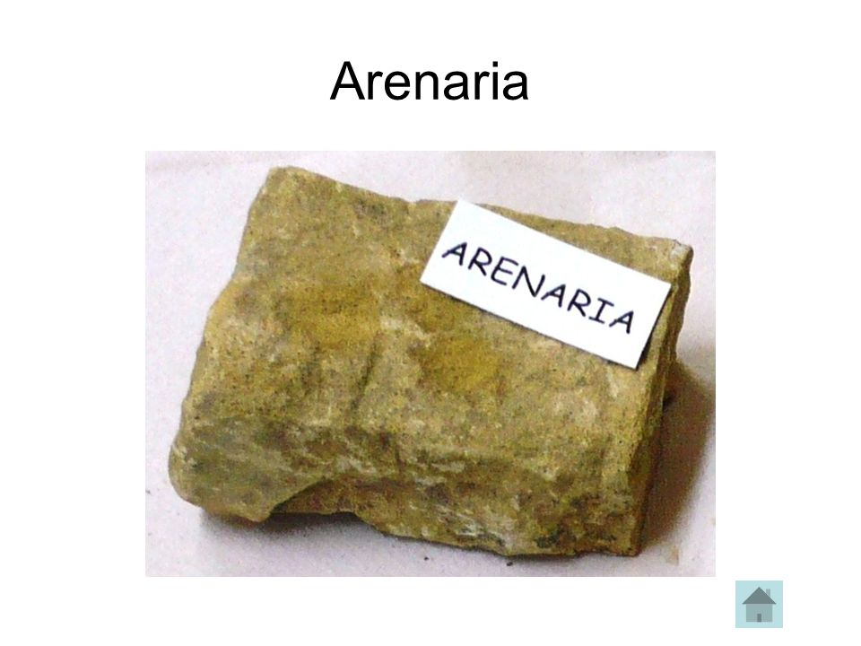 Arenaria