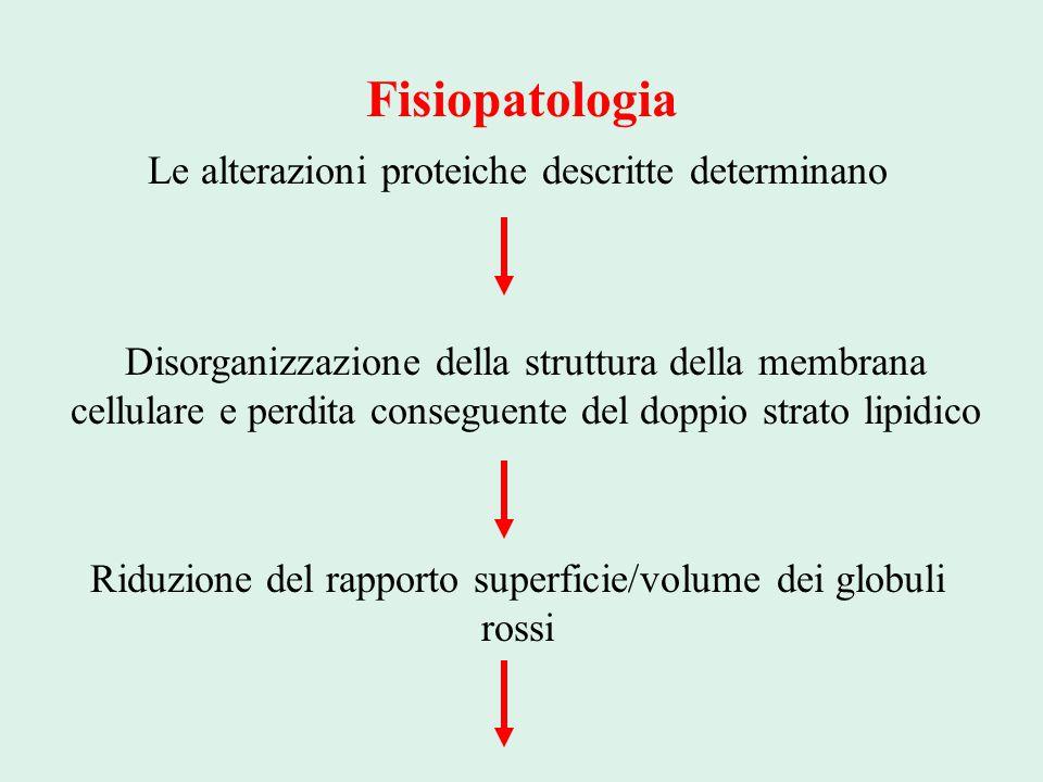 Fisiopatologia Le alterazioni proteiche descritte determinano