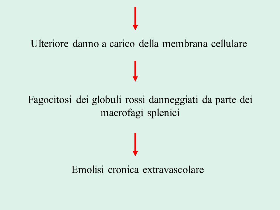 Ulteriore danno a carico della membrana cellulare