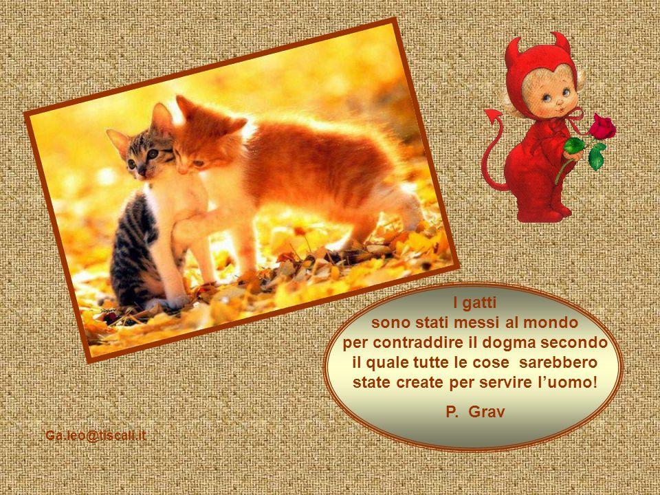 I gatti sono stati messi al mondo per contraddire il dogma secondo il quale tutte le cose sarebbero state create per servire l'uomo!