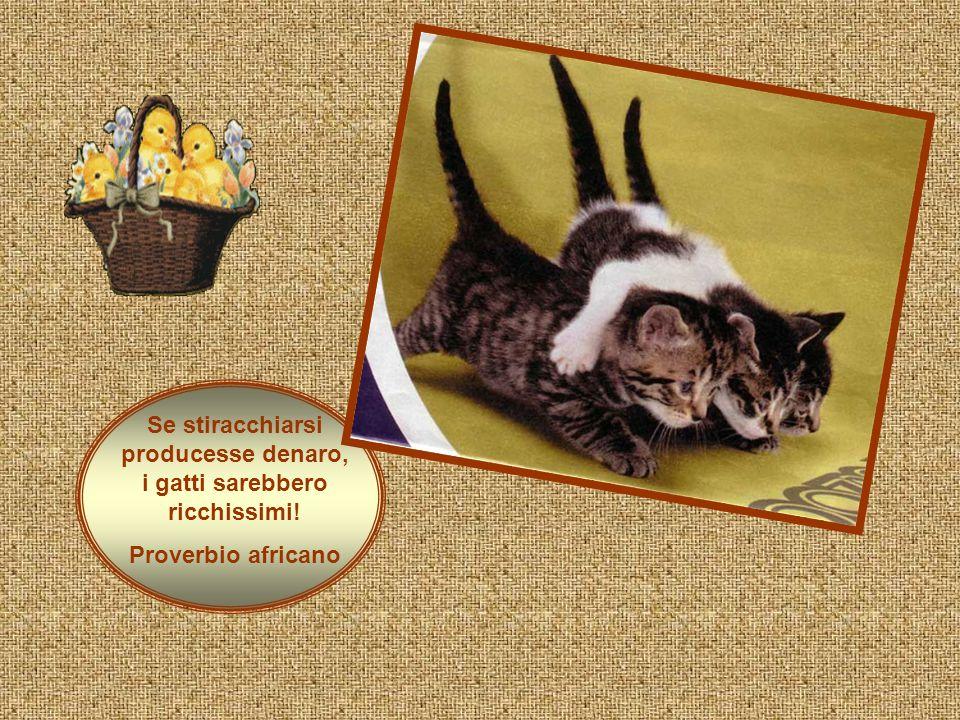 Se stiracchiarsi producesse denaro, i gatti sarebbero ricchissimi!