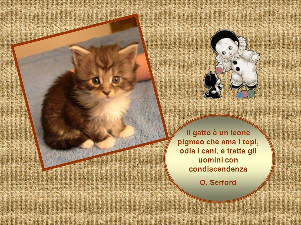Il gatto è un leone pigmeo che ama i topi, odia i cani, e tratta gli uomini con condiscendenza