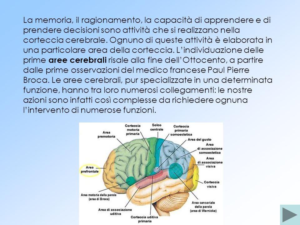 La memoria, il ragionamento, la capacità di apprendere e di prendere decisioni sono attività che si realizzano nella corteccia cerebrale.