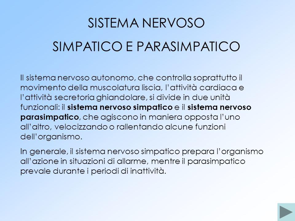 SIMPATICO E PARASIMPATICO