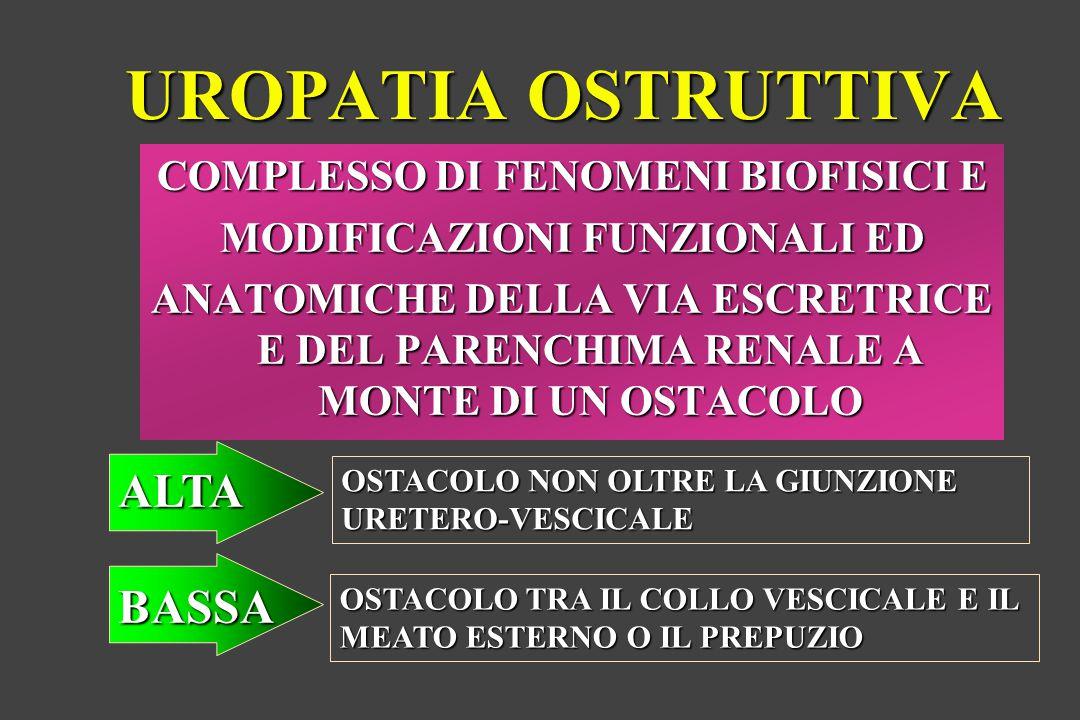 COMPLESSO DI FENOMENI BIOFISICI E MODIFICAZIONI FUNZIONALI ED