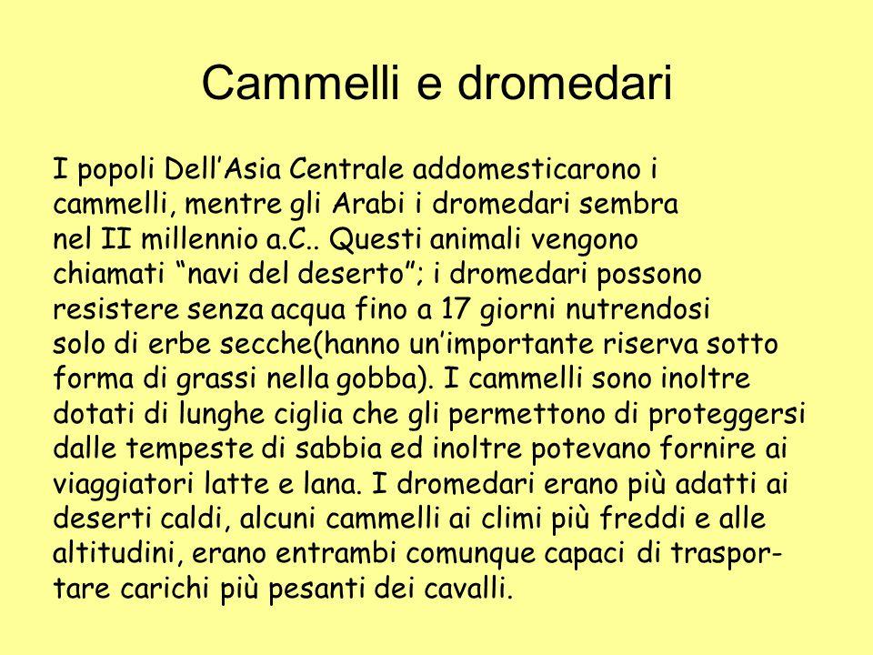Cammelli e dromedari I popoli Dell'Asia Centrale addomesticarono i