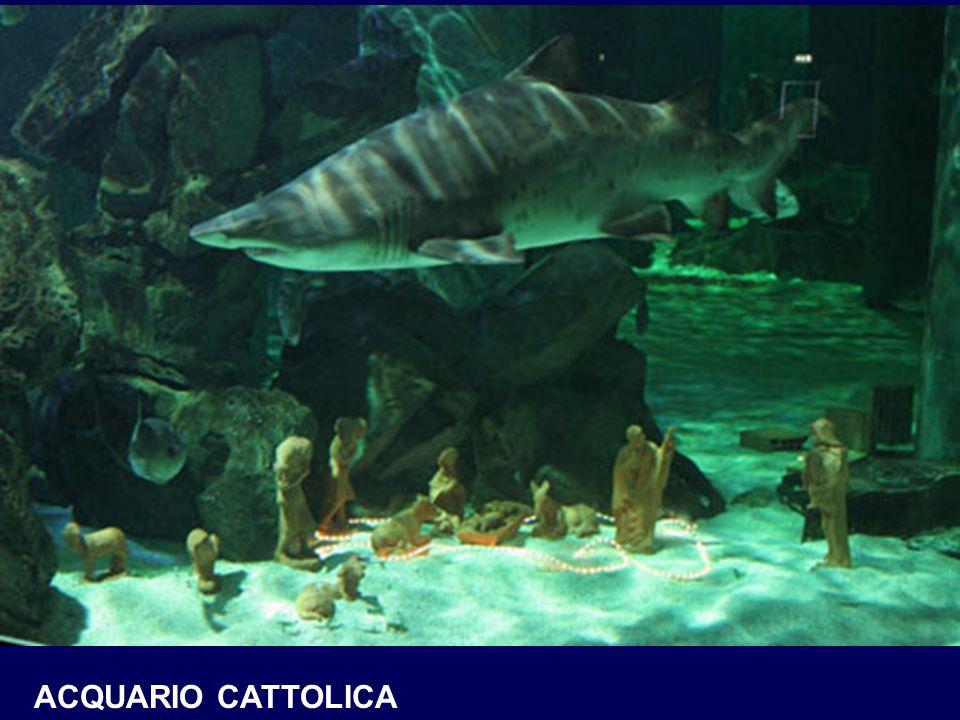 ACQUARIO CATTOLICA
