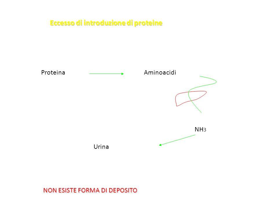 Eccesso di introduzione di proteine