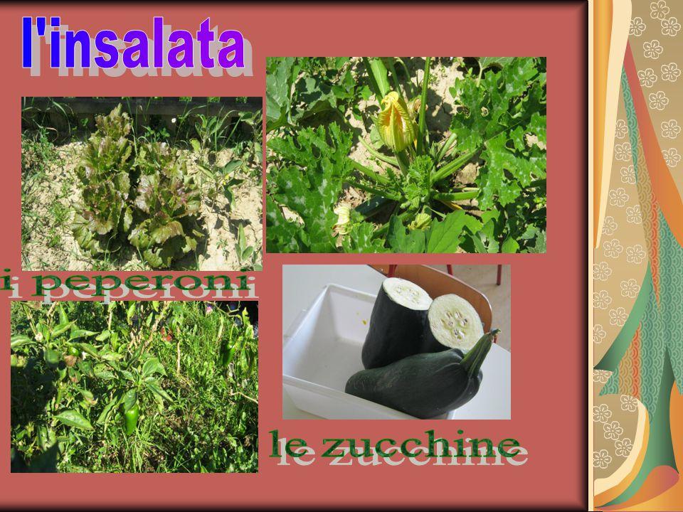 l insalata i peperoni le zucchine