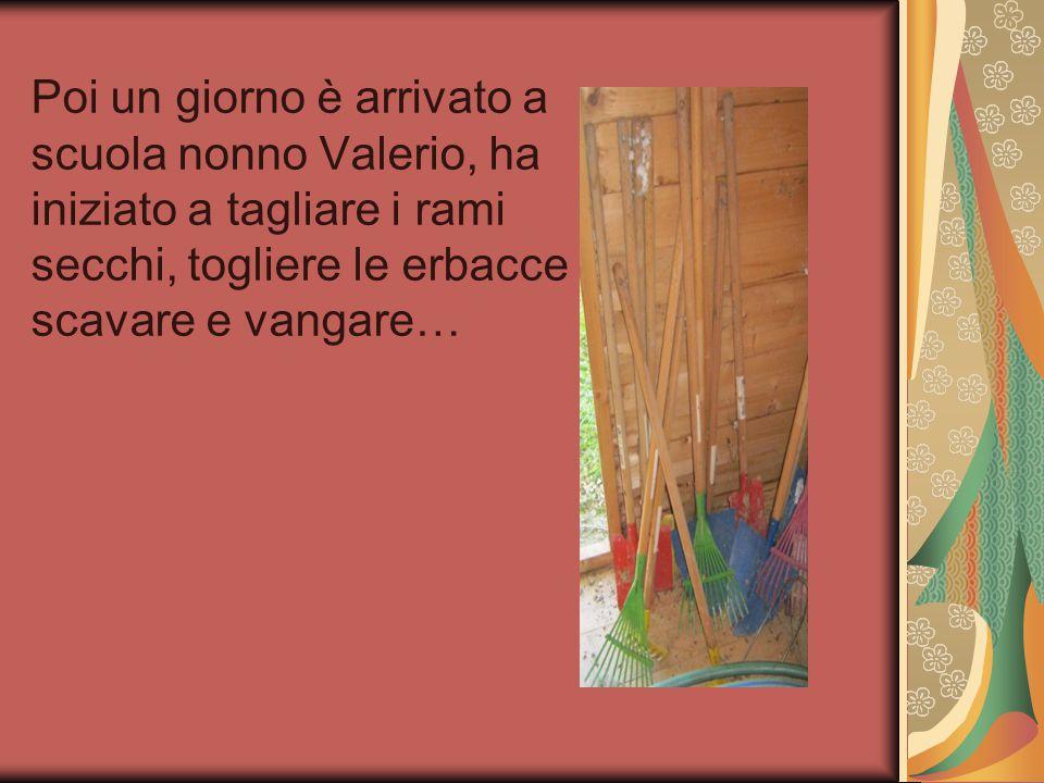 Poi un giorno è arrivato a scuola nonno Valerio, ha iniziato a tagliare i rami secchi, togliere le erbacce scavare e vangare…