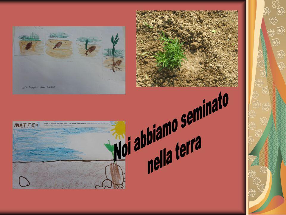 Noi abbiamo seminato nella terra