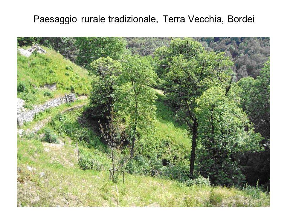 Paesaggio rurale tradizionale, Terra Vecchia, Bordei