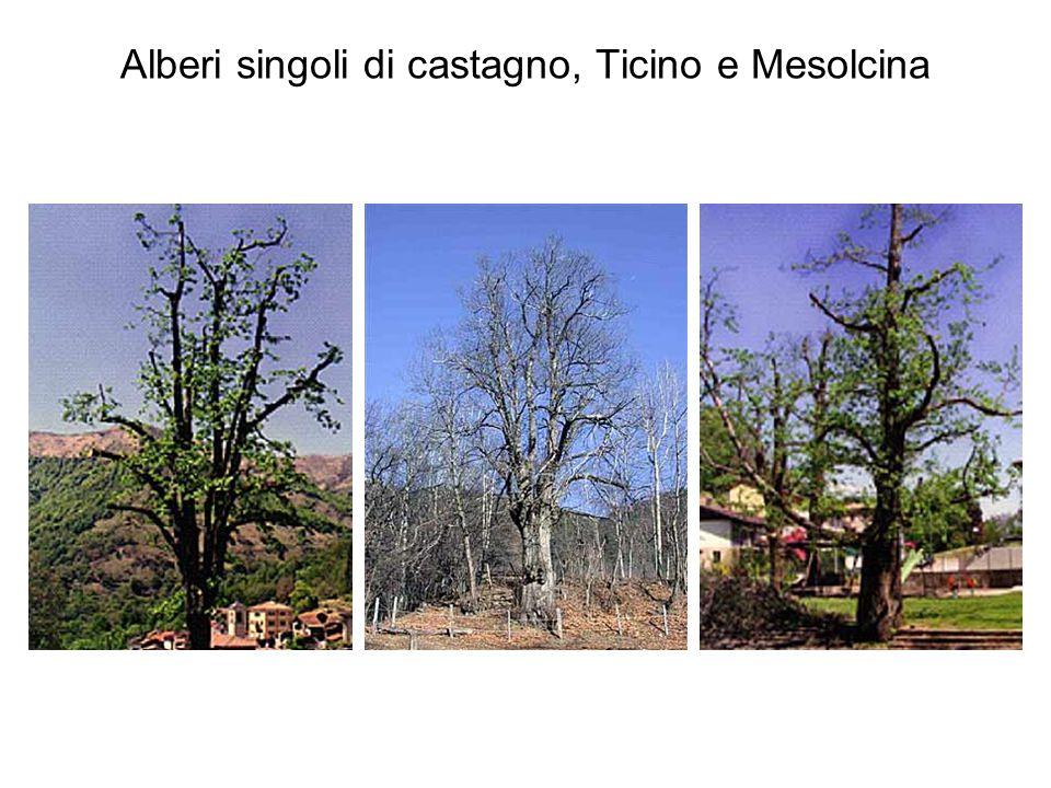 Alberi singoli di castagno, Ticino e Mesolcina