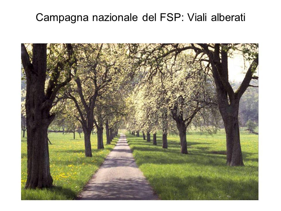 Campagna nazionale del FSP: Viali alberati