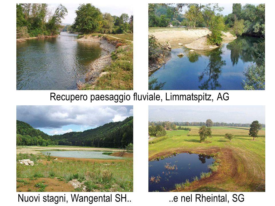 Recupero paesaggio fluviale, Limmatspitz, AG