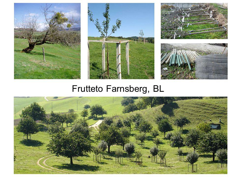 Frutteto Farnsberg, BL