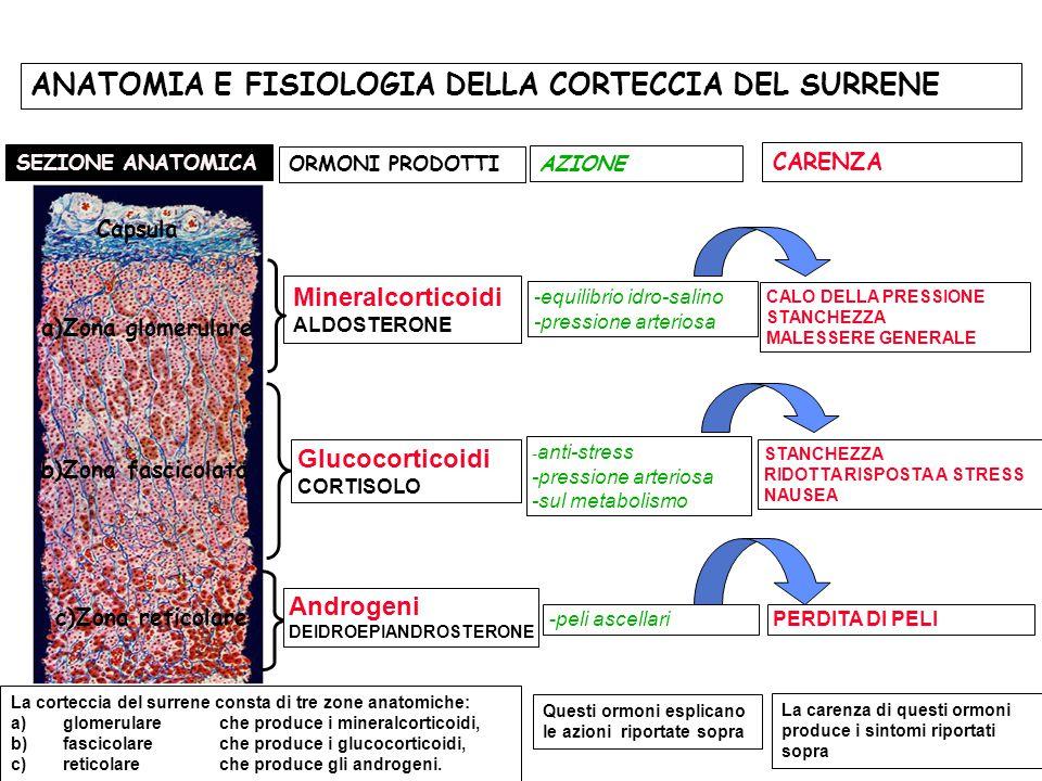 ANATOMIA E FISIOLOGIA DELLA CORTECCIA DEL SURRENE