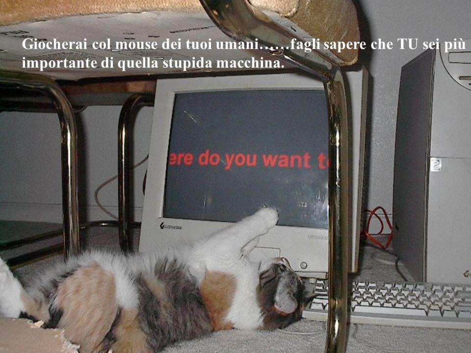 Giocherai col mouse dei tuoi umani……fagli sapere che TU sei più